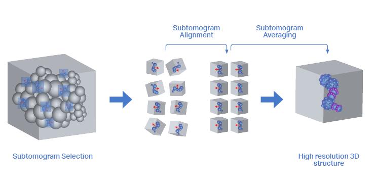 Tilt series converted into a 3D reconstruction