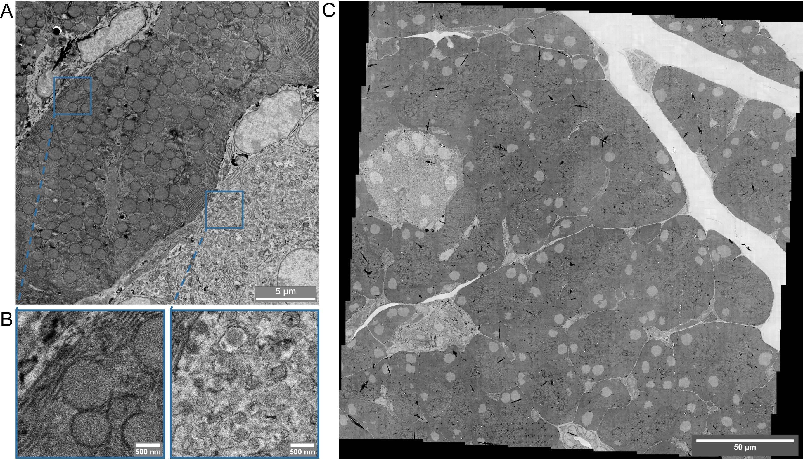 Figure2_Cell_Field_Megafield_elmi
