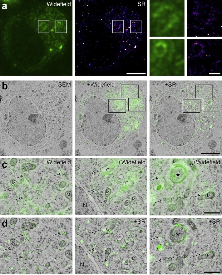 super-resolution correlative microscopy