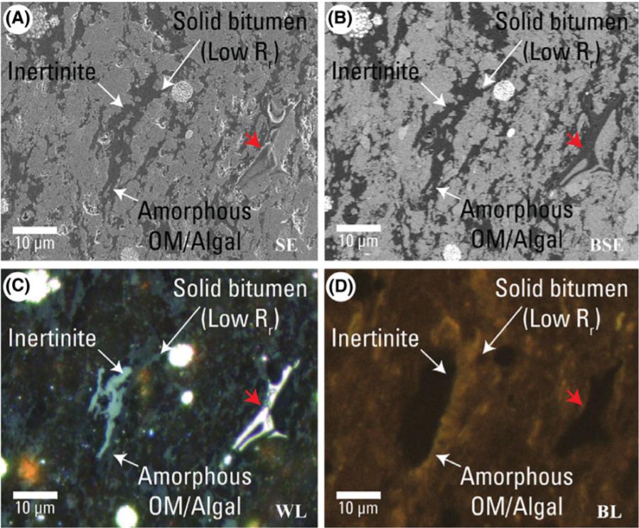 clem for sedimentary organic matter